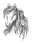Young horse head sketch with wavy mane Royalty Free Stock Image