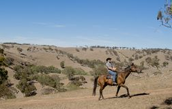 Young horse instructor or cattleman riding the animal in cowboy hat and rider boots Royalty Free Stock Image