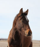 Young horse with sly look Royalty Free Stock Images
