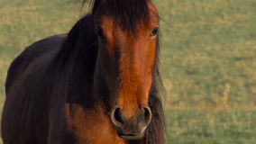 Young Horse stock footage