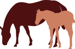 Mare and colt or filly illustration Stock Photos