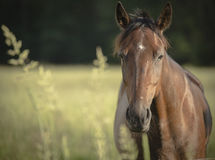 Young horse at the meadow Stock Photo
