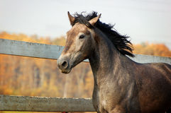 Young horse portrait Royalty Free Stock Photos