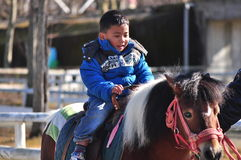 A young horse rider. A three years old horse rider rides a horse Royalty Free Stock Photos