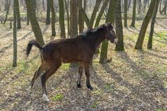 Young horse in spring forest Royalty Free Stock Photos
