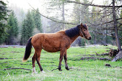 Young horse standing on the grass Stock Image