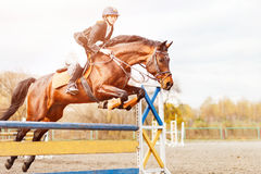 Young horseback rider jumping over hurdle on show Stock Photos