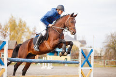 Young horseman on show jumping competition. Rider with sorrel horse jump over the hurdle Royalty Free Stock Images