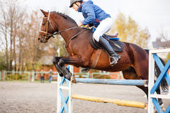 Young horseman on show jumping competition. Rider with sorrel horse jump over the hurdle Royalty Free Stock Photography