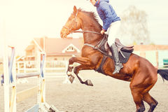 Young horseman on show jumping competition. Rider with sorrel horse jump over the hurdle Stock Photos