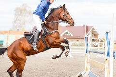 Young horseman on show jumping competition. Rider with sorrel horse jump over the hurdle Royalty Free Stock Photo
