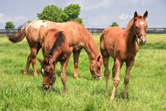 Young Horses Stock Images