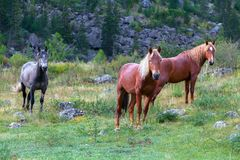 Young horses in the wild Stock Photo