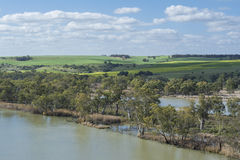 Young Husband, Murray River, South Australia and Green Fields Stock Images