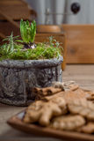 Young hyacinth bulb in ornate clay pot in the kitchen Royalty Free Stock Photos