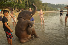 Young Indian elephant. A young Indian elephant bathing in the lagoon of Koh Chang island in Thailand stock photo