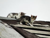 Young inexperienced shy wild kittens on the roof of an old rustic barn. A pair of pitiable homeless small cats. Royalty Free Stock Photography