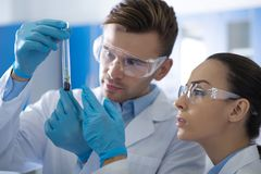 Young interested investigators standing and overlooking the test tube. royalty free stock photo