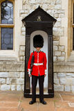 Young Irish Guard at the Tower of London Stock Images
