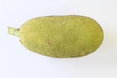 Young Jack fruit isolated Stock Photography