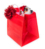 Young Jack Russel wearing santa claus dress in red shopping bag Royalty Free Stock Images