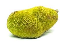 Young jackfruit isolated. Stock Photo