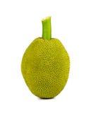 Young Jackfruit on white background. Stock Image