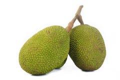 Young Jackfruits Royalty Free Stock Photos