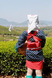 Young japanese tea picker. With traditional clothing kimono, back view Stock Images
