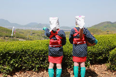 Young japanese tea picker Royalty Free Stock Photography