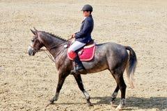 Young jockey horseback riding on purebred horse stock photo