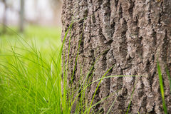 Young juicy green grass Stock Images