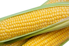 Young, juicy, ripe, raw corn on the cob close-up lying on green leaves on a white background. Collect corn crop. The concept of healthy eating Stock Photo