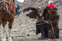 Young Kazakh Eagle Huntress Berkutchi woman with horse while hunting to the hare with a golden eagles on his arms. BAYAN-ULGII, MONGOLIA - SEP 30, 2017: Kazakh Royalty Free Stock Photography