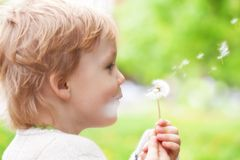 Young kid blowing wishes on dandelion seed royalty free stock image