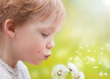 Young kid blowing wishes on dandelion seed Stock Images