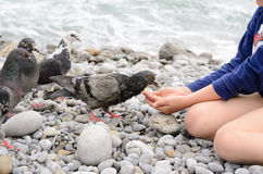 Young Kid Feeding Dove Bird Using Bare Hand Stock Photos