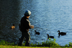 Young kid feeding ducks Stock Photo