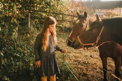 Young kid girl playing with horses. In sunset light royalty free stock photo