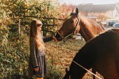 Young kid girl playing with horses. In sunset light royalty free stock photography