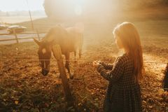 Young kid girl playing with horses. In sunset light royalty free stock images