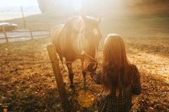 Young kid girl playing with horses. In sunset light stock image