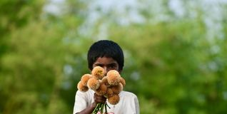 Young kid is selling flowers on the street isolated unique photograph. A young Bangladeshi kid is holding some flowers in hand and selling it on the street stock images