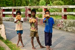 Young kid is selling flowers on the street - Stop Child Labor. A young Bangladeshi kid is holding some flowers in hand and selling it on the street unique royalty free stock photo