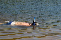 Young kid snorkeling in a lake Stock Photo