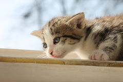 Young kitten. Young black cat on window Stock Photos
