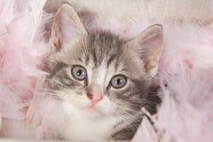 Young kitten in box. Cute kitten in a box Stock Photos