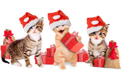 Young kitten with Christmas hats and gifts Royalty Free Stock Image