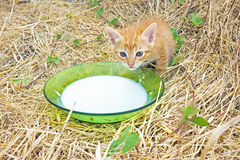 Young kitten drinking milk Stock Photos