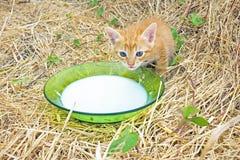 Young kitten drinking milk Stock Photos